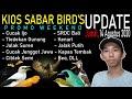 Harga Burung Tledekan Gunung Srdc Bali Cucak Ijo Kenari Dll Di Kios Sabar Birds Promo Weekend  Mp3 - Mp4 Download