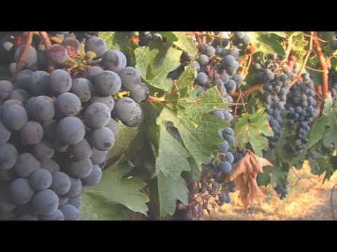 Visit Tri-Cities: The Heart of Washington Wine Country