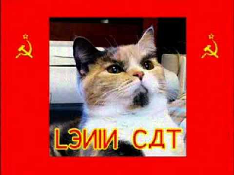 Cat Meme Stop