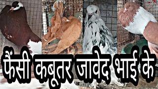 Bhopal Fancy Pigeons Farm Of Javed Bhai
