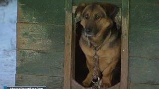 Собаки приюта под Можайском ждут помощи и хозяев