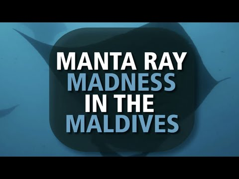 SZtv Wildlife Feature | Manta Madness in the Maldives