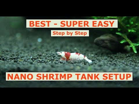 Nano Shrimp Tank Setup - 2019 | Super Easy Step By Step Guide