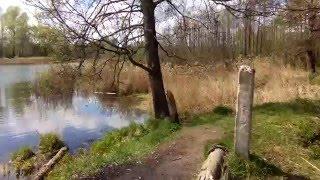 Кваканье лягушек на пруду (весна)