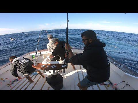 IFISH - Bermagui Marlin Madness!