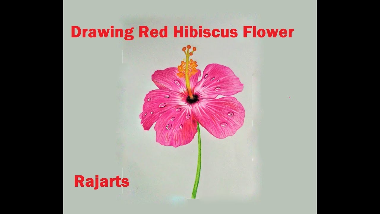 How To Draw Red Hibiscus Flower With Water Drops Youtube