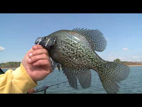 Nothing like feeling the crappie thump!