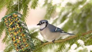Augusta Outdoors: Bird Watching - How To Birdwatch, Where To Birdwatch And What You Will Need