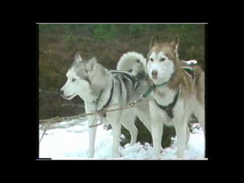 building an electric Husky in 1985 -  The Great Egg Race