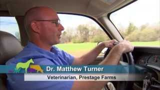 VetsOnCall - Dr. Turner keeps pigs healthy + food safe