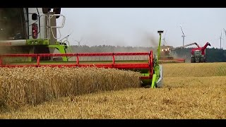 Wielkie Żniwa 2015 | 5 x Lexion | 5 x New Holland | Big Harvest in Poland