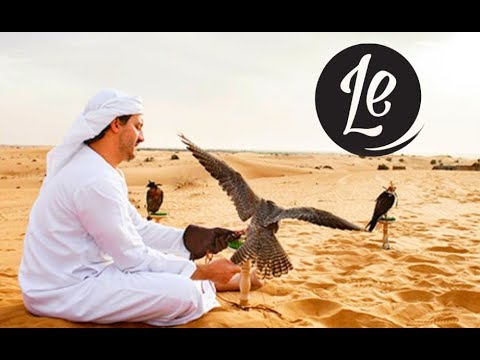 platinum-heritage-falcon-experience,-dubai--the-world's-best-holidays-on-7-|-luxury-escapes