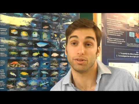 The Marine Ornamental Fish Aquaculture