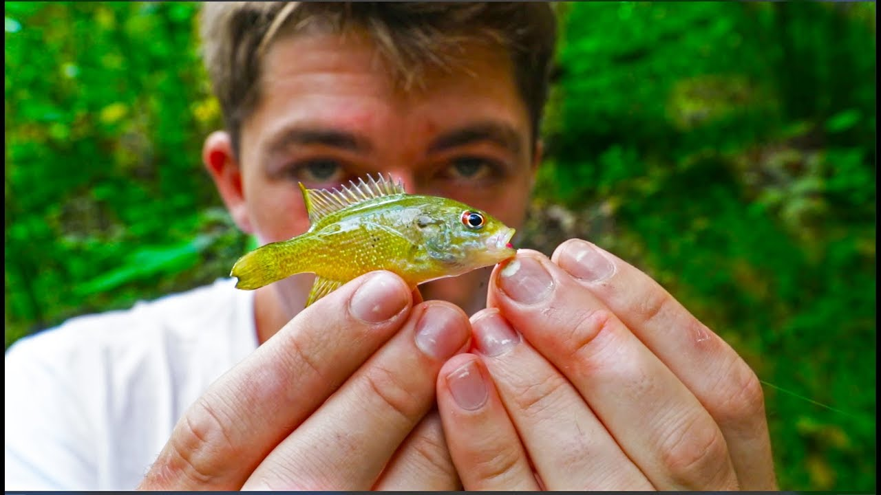 Micro fishing hidden backwoods stream homecoming tour for Micro fishing hooks