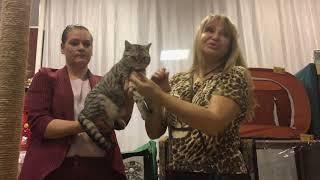 Международная выставка кошек в Хабаровске