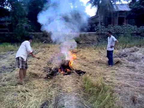 """Về quê ăn """"Cá lóc nướng trui"""" (Thủ Thừa - Long An)"""