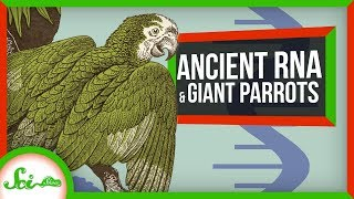 scientists-pull-rna-from-a-14-000-year-old-wolf-scishow-news