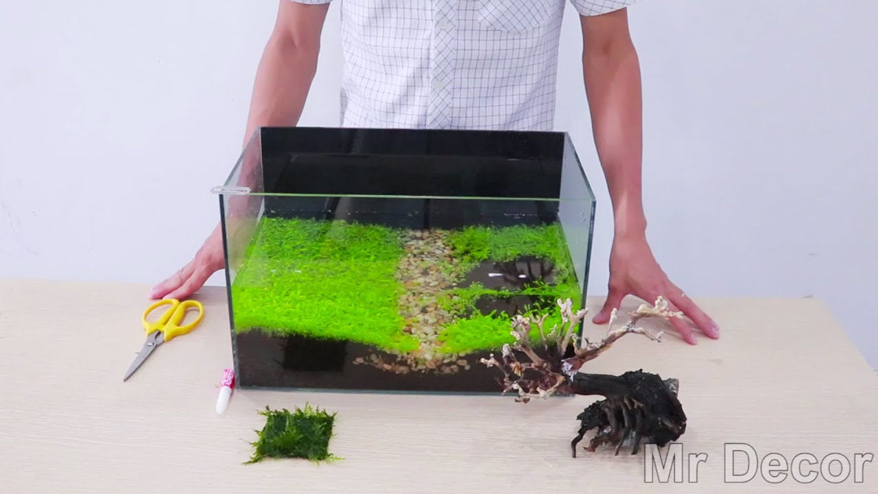 How To Attach Moss To The Driftwood Aquascape No Co2 - DIY Aquarium Decoration Ideas - MR DECOR