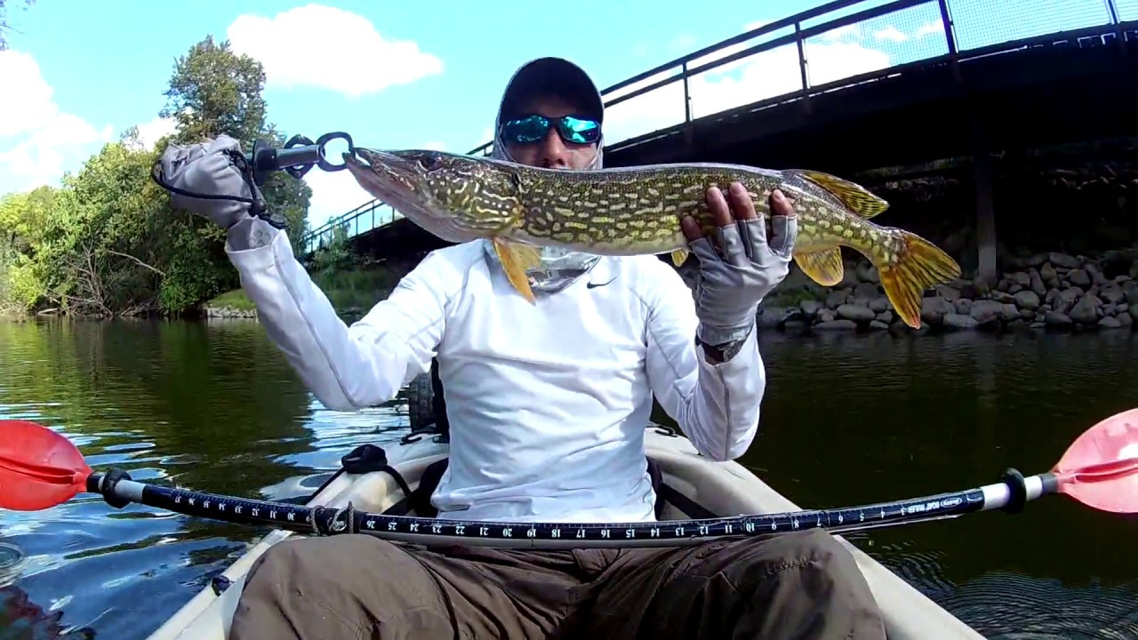 Anatomy of a Topwater Pike Strike - Des Plaines River 9/11/2016 ...