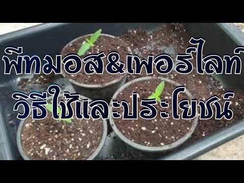 EP31. พีทมอส\u0026เพอร์ไลท์ ประโยชน์และการใช้ กับต้นไม้ทุกชนิด