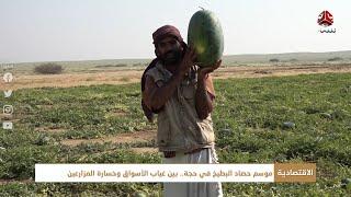 موسم حصاد البطيخ في حجة .. بين غياب الأسواق وخسارة المزارعين