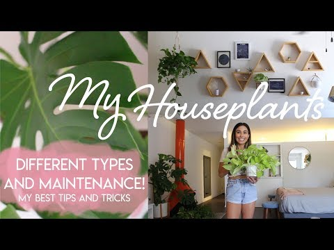My Houseplants: Types, Tips, and Tools For Indoor Plants