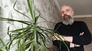 Экстрасенс говорит о коронавирусе , реальная ситуация в Украине