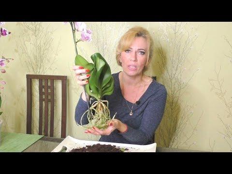 Пересадка новой орхидеи. Важные моменты при пересадке!!!