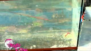 CRAZY FISH VIBRO WORM