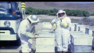 [Alieni nuove rivelazioni] L'Astronauta Dell'Estuario del Solway