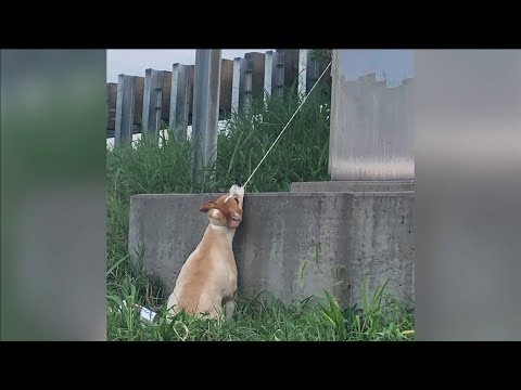 Kylie - GOOD VIBES: Man saves dog that nearly died