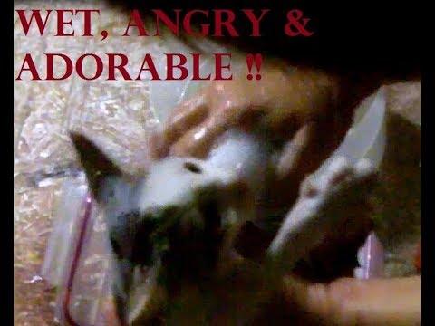 safe-flea-bath-for-kittens-with-dawn-+-apple-cider-vinegar-water-rinse