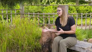 Ornamental Turf and Grasses PT. 2 on the Best of Oklahoma Gardening (#4735)