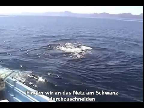 Erstaunliche Entdeckung auf einem Wal