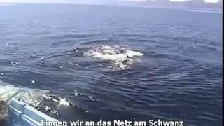 Todgeweihter Wal und dann die wundervolle Rettung / Das wird Dein Herz berühren ♥♥♥