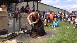 Shearing Demo at 2014 Maryland Sheep & Wool Festival