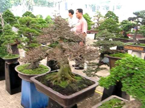 Festival Sinh Vật Cảnh Tỉnh Đồng Tháp ngày 1/12/2010