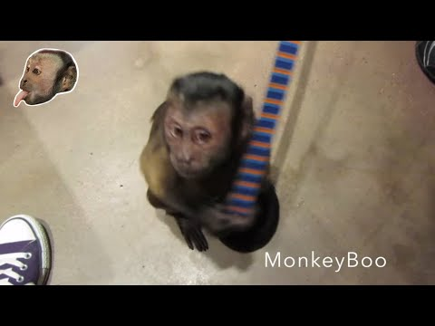 Monkey Gets A SHOT!