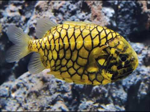 Visite du grand aquarium de Saint Malo