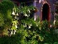 Spanish/Mexican garden heritage | William Welch |Central Texas Gardener