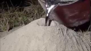 Как избавиться от муравьев и получить удивительные скульптуры