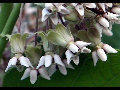 Plant reproductive morphology