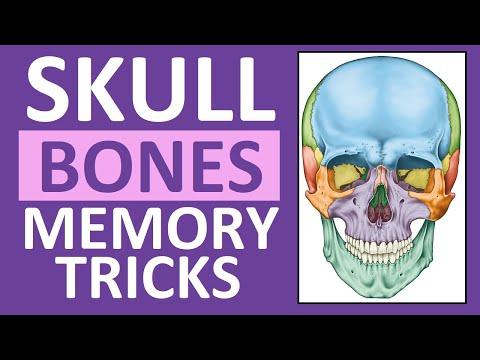Skull Bones Mnemonic (Cranial and Facial Bones) | Anatomy and Physiology