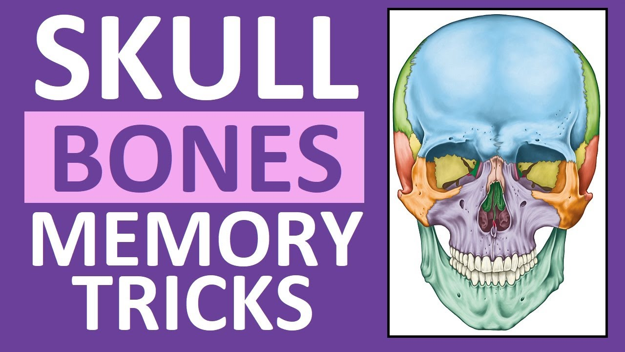 How To Learn The Human Bones Tips To Memorize The Skeletal Bones Anatomy Physiology Youtube