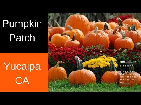 Pumpkin Patch Yucaipa California