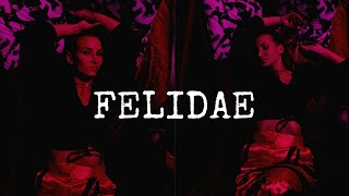 FELIDAE *Fashion Film*