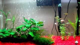 40 Gallon Tetra Tank Freshwater Planted Aquarium Snails