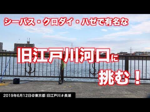 【旧江戸川河口で釣り】クロダイ・シーバスで有名な釣り場に釣り初心者が挑む!《2019年6月12日》東京湾奥を進撃する!