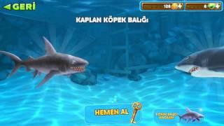 Hungry Shark |Yeni Seri| Bölüm 1