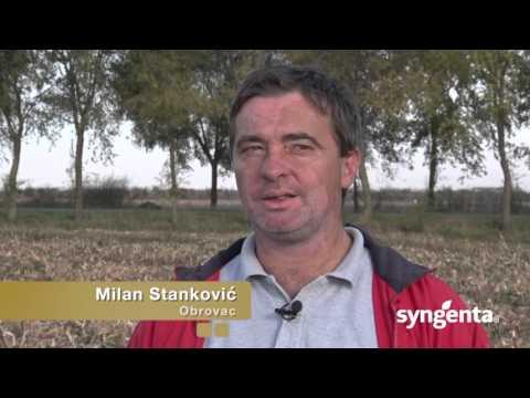 Syngenta hibridi kukuruza – isplati se sejati ih!_440_20.02.2016.